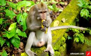 Du lịch Bali – Khám phá Rừng Khỉ Ubud