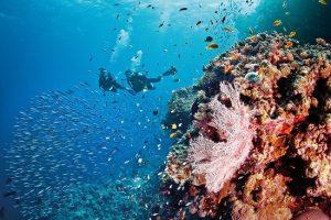 Khám phá rạn san hô lớn nhất thế giới Great Barrier